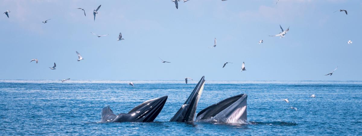 絶滅の危機に瀕するビットコインの「クジラ」